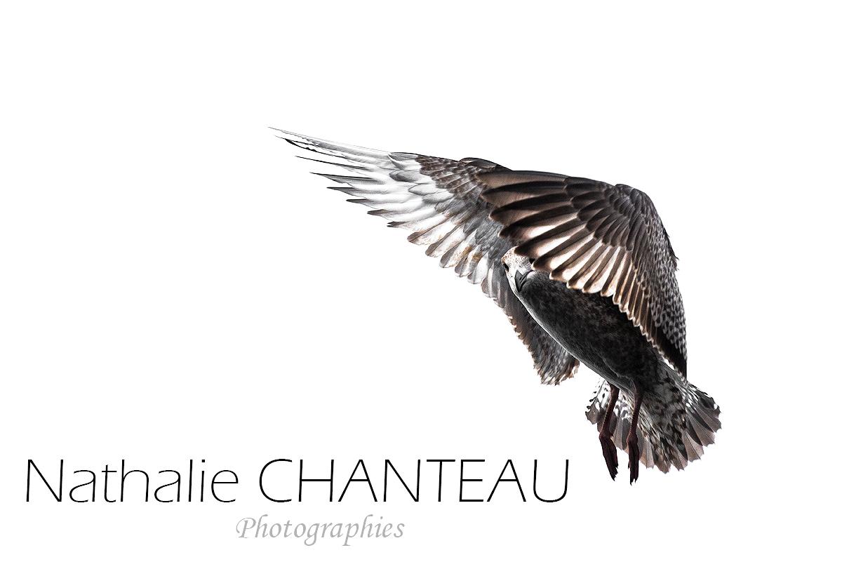 Nathalie Chanteau …